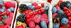 Základní rozdělení tuzemského ovoce