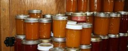 Výrobky z ovocných plodů a konzervace