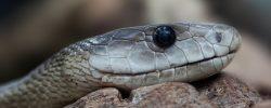 Jak se zachovat při uštknutí od zmije?