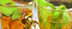 4 tipy na bylinky vhodné k přípravě zdravého a chutného čaje