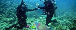 Tipy na nejlepší potápěčské destinace světa: Kde se vám nebude chtít z vody?