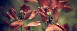 Prahne vaše zahrada po vláze? Zkuste naše tipy proti jejímu vysušení