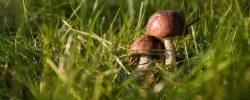 Netradiční recepty z hub