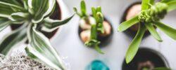 I v tmavém bytě můžete mít pokojové rostliny