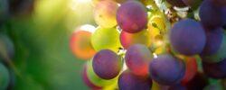 Vydejte se prozkoumat moravské vinařské stezky, stojí za to