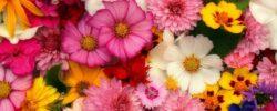 Květomluva aneb jak květinou vyjádřit své city