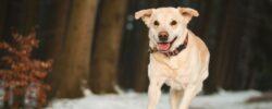 5 tipů, jak chránit svého psa před mrazem