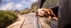 5 tipů, jak zvládnout dovolenou se psem
