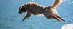 Letní psí nástrahy, které nesmíte podcenit