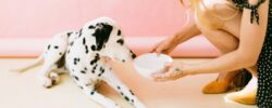 Jaké doplňky stravy zvolit na zdravotní neduhy u psů?