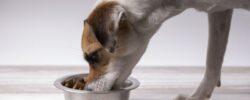 5 největších mýtů o krmivech pro psy a kočky